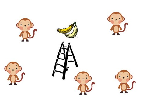 One Lesson How Monkeys Are Teaching Us to Work Smarter